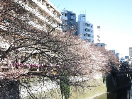 花見2015:中目黒の桜