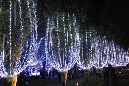 2015年東京ミッドタウンクリスマスイルミネーション シャンパンイルミネーション