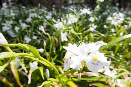 日比谷公園 2016年春