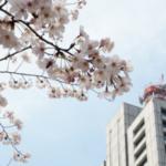 【2016年 お花見】日比谷公園の桜が満開!オリンパスE-PL7で撮影してきた